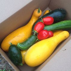 Donate the extra produce from your garden to the local food pantry.