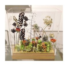 small garden made from dried plants with real butterfly @hutspot020
