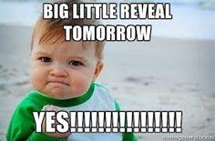big little reveal memes - Google Search