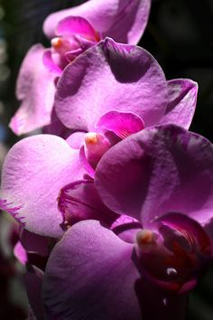 Pretty Little Purple Orchids. Follow us for great wedding tips and trends Labola.co.za