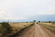 Through the savannah