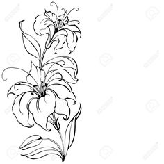 illustration of lilies in circle - Google Search