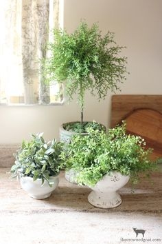 How to Create an Herb Topiary - using faux plants, Styrofoam and a decorative pot. This is an easy and inexpensive project that can be made in just a few minutes - via The Crowned Goat Topiary Garden, Topiary Trees, Garden Pots, Topiary Decor, Topiary Plants, Topiary Centerpieces, Boxwood Topiary, Potted Trees, Garden Ideas