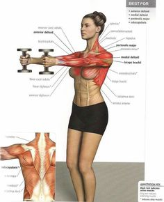 Front Shoulder Training - Stronger Back Healthy Fitness Level. Love the visual of the muscles worked