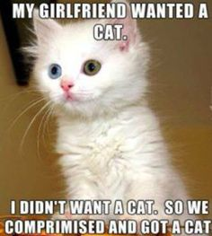 34 Funny Cat Pictures Because Caturday Is Almost Here - Animal memes - Katzen Cute Animal Memes, Funny Animal Quotes, Animal Jokes, Cute Funny Animals, Cute Baby Animals, Funny Cute, Cute Cats, Animals Kissing, Funny Kitties