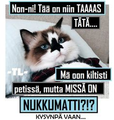 missä on nukkumatti Animals And Pets, Funny Animals, Funny Meems, Sweet Girls, Live Life, Good Night, Texts, Poems, Funny Pictures