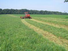 Moorefield Hay Farms