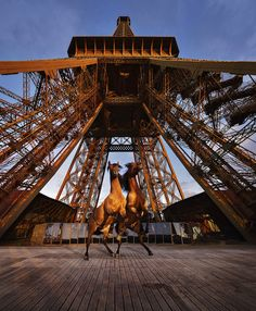 Artist Paola Pivi, Yee-Haw (2015) Releases Horses at the Eiffel Tower -  Photo: Courtesy Galerie Perrotin via Design Boom