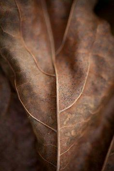 Leaf Texture - reminds me of a beating heart. Foto Macro, Leaf Texture, Brown Texture, Visual Texture, Brown Aesthetic, Autumn Aesthetic, Color Photography, Macro Photography, Brown Beige