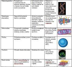 video aula biologia protein as para bajar de peso