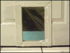 Cat runs into cellophane on cat door - AnimalsBeingDicks - can't stop laughing