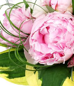 peonies....thinking Tommy's grandmother....she had a beautiful flower garden full of peonies!