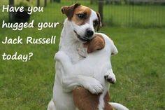 Jack Russell Hug