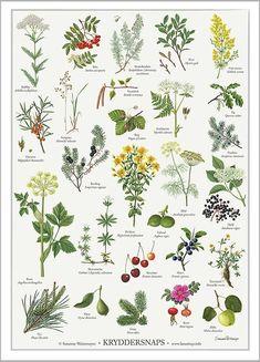 Varm dig på en hjemmelavet kryddersnaps med naturens vilde planter eller nyd varmen af denne plakat fra Koustrup & Co. illustreret af Susanne Weitemeyer.