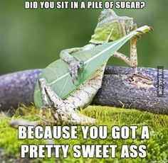 Sleazy lounge lizard pick up lines
