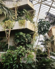 Change and Romaine (@change.and.romaine) on Instagram: Junglism v Brutalism at Barbican Conservatory, London. The plants won