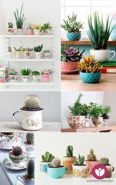 O Primavera Garden preparou uma galeria de imagens de cactus e suculentas para inspirar você a utilizar essas lindas e resistentes plantas na decoração de ambientes.
