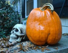 How to keep animals from eating your pumpkins- so glad to know this! I am so tired of squirrels eating my pumpkins every fall.