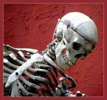 skull by Mittelfranke
