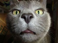 Very interesting post: Cat Selfie pics).сom lot of interesting things on Funny Cat. Funny Cat Fails, Funny Cat Compilation, Funny Cat Videos, Funny Animal Pictures, Funny Cats, Funny Animals, Vine Compilation, Silly Cats, Selfie Gato
