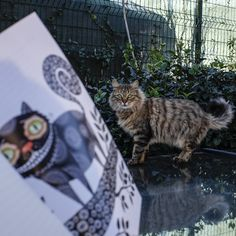 İllüstratör Berna Yangın tarafından canlandırılan Alice In Wonderland'in sevilen karakteri Cheshire Kedisi... #aliceinwonderland #onlineshop #cheshire #cat #notebook