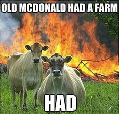 In the song they said he HAD a farm not HAS one Animals funny pic hilarious animal meme humor photo Old MacDonald