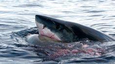 Les dix conseils ci-après se fondent sur l'analyse des accidents mortels causés par des requins et sur des entretiens avec les survivants.