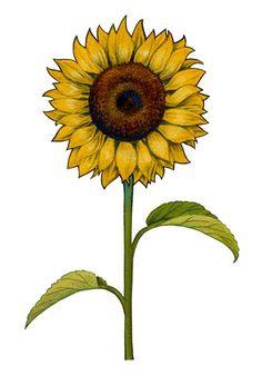 Floral Sunflower at FramedArt.com