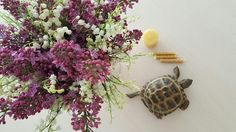 Beeswax candles, turtle and flowers