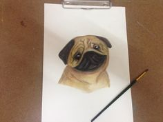 the drawing of pug with water color pencil by tuang