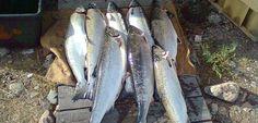 Finland, Fish, Pisces