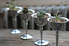 Blue Skies and Bunting: Simple - Succulents