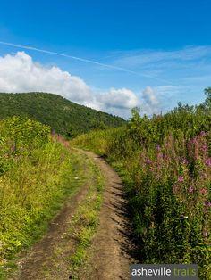 Hike the Sam Knob Trail off the Blue Ridge Parkway through fields of abundant wildflowers near Asheville, NC