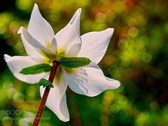http://ift.tt/2jr6Zkd #Nature_breathtaking #Photos into the light by edzerdla