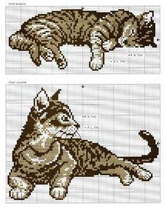 Bekijk de foto van toerzeilster met als titel katten 2 en andere inspirerende plaatjes op Welke.nl.