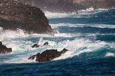 Galapagos Islands - Rugged coast of Espanola.  Photo by Karen, Alan Fox/Bill, Judy Tink