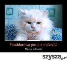 Śmieszne zdjęcia - Szysza.pl Very Funny Memes, Funny Jokes In Hindi, Silly Jokes, Wtf Funny, Funny Cats, Hilarious, Animals And Pets, Funny Animals, Cat Memes