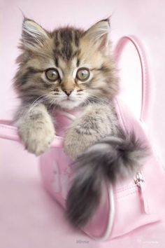 Kitten - Minnie - Rachel Hale - Official Poster. Official Merchandise. Size: 61cm x 91.5cm. FREE SHIPPING