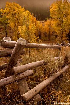 Autumn in Jackson Hole, Grand Teton National Park, Wyoming. I will go to Jackson Hole! Grand Teton National Park, National Parks, Beautiful World, Beautiful Places, All Nature, Jackson Hole, Jackson Wyoming, Mellow Yellow, Belle Photo