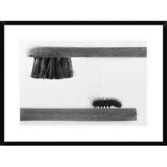 """Global Gallery 'Dear Friend' by Stefano Mallus Framed Photographic Print Size: 22"""" H x 30"""" W x 1.5"""" D"""