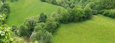 vue aérienne d'une ripisylve