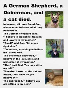 Cat Jokes, Cartoon Jokes, Stupid Jokes, Funny Cats, Funny Animals, Cute Animals, Animal Funnies, Animals Beautiful, Joke Of The Week