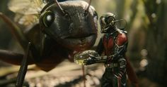What starts as a drizzle becomes a hurricane of action and special effects as 'Ant-Man' kicks into high gear during its second half.