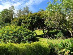Go green, hug a tree in Luna Runtun gardens... #Baños #Ecuador…
