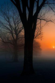 ✯ Foggy Sunrise