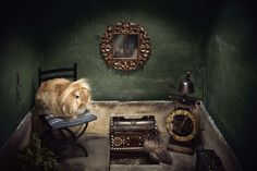 Eva Diez  www.evadiez.es Animal Photography, Animals, Pet Photography, Fotografia, Animales, Nature Photography, Animaux, Animal Pictures, Animal