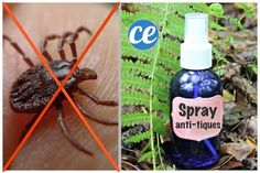 Homemade Insect Spray - No-one wants insects in their home but, there are many people who do not want to spray chemical insect sprays either. Detox, Diy Stuffed Animals, Pet Shop, Spray Bottle, Cleaning, Homemade, Miracle, Josh, Gardens
