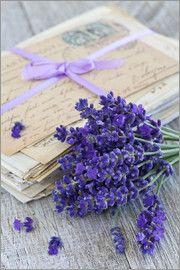 Andrea Haase Foto - Lavendel 3