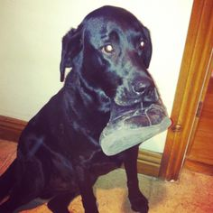 I'm not really chewing your shoe