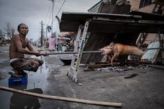 Tacloban, Philippines: A typhoon survivor roasts a pig on the pavement